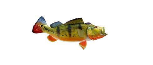 basss